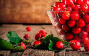 Как правильно заготовить и хранить плоды боярышника