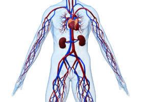 Показаниями для ангиографии служат любые заболевания сосудов и вен