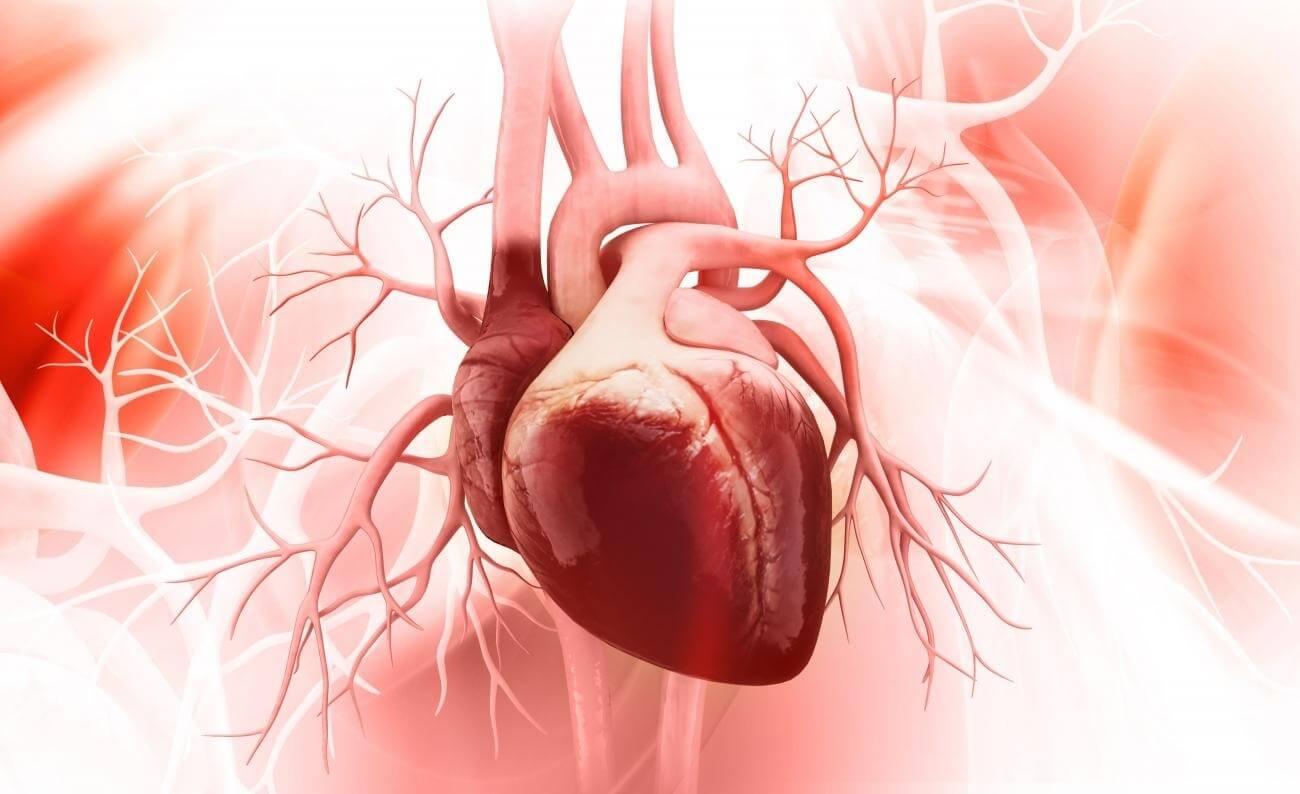 Трансплантация сердца в России: история и современность