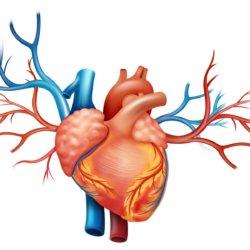 Основные признаки левожелудочковой сердечной недостаточности