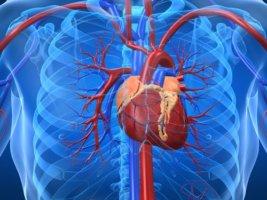Симптомы диффузного кардиосклероза зависят от стадии заболевания