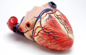 Перикардит – это воспалительное поражение серозное оболочки сердца
