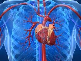ХЛС имеет три стадии развития – доклиническую, компенсированную и декомпенсированую