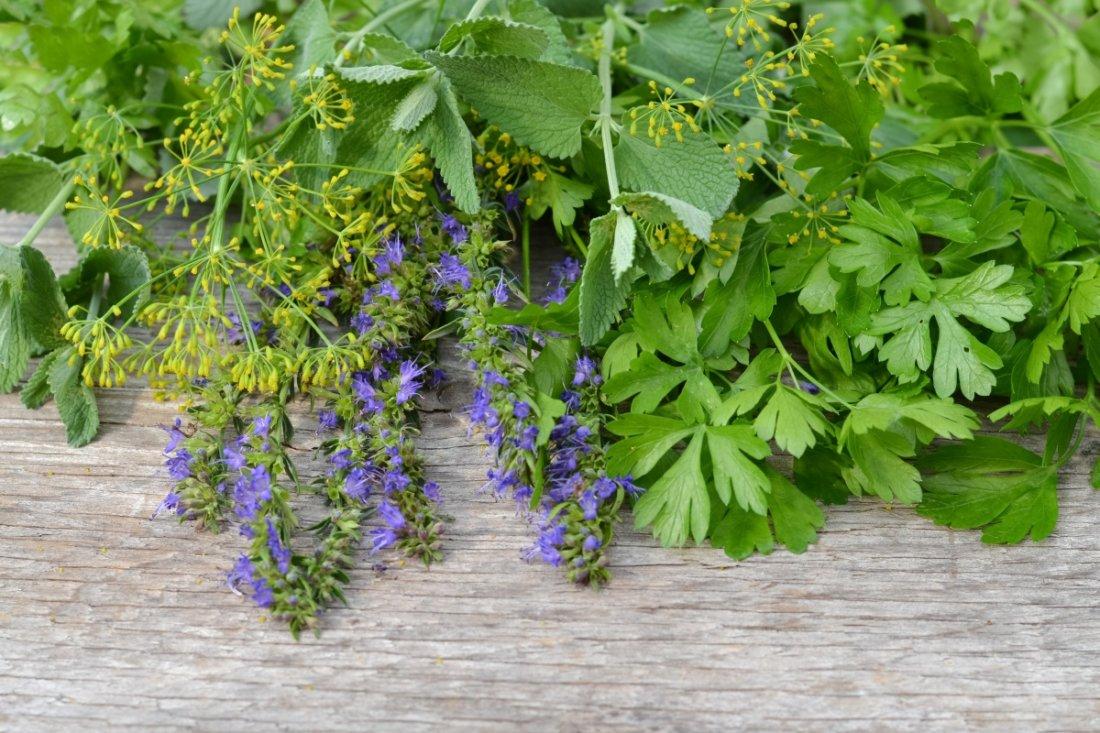 Какие травы чистят сосуды головного мозга и улучшают кровообращение