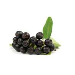 Как влияет на организм человека черноплодка – повышает илипонижает давление