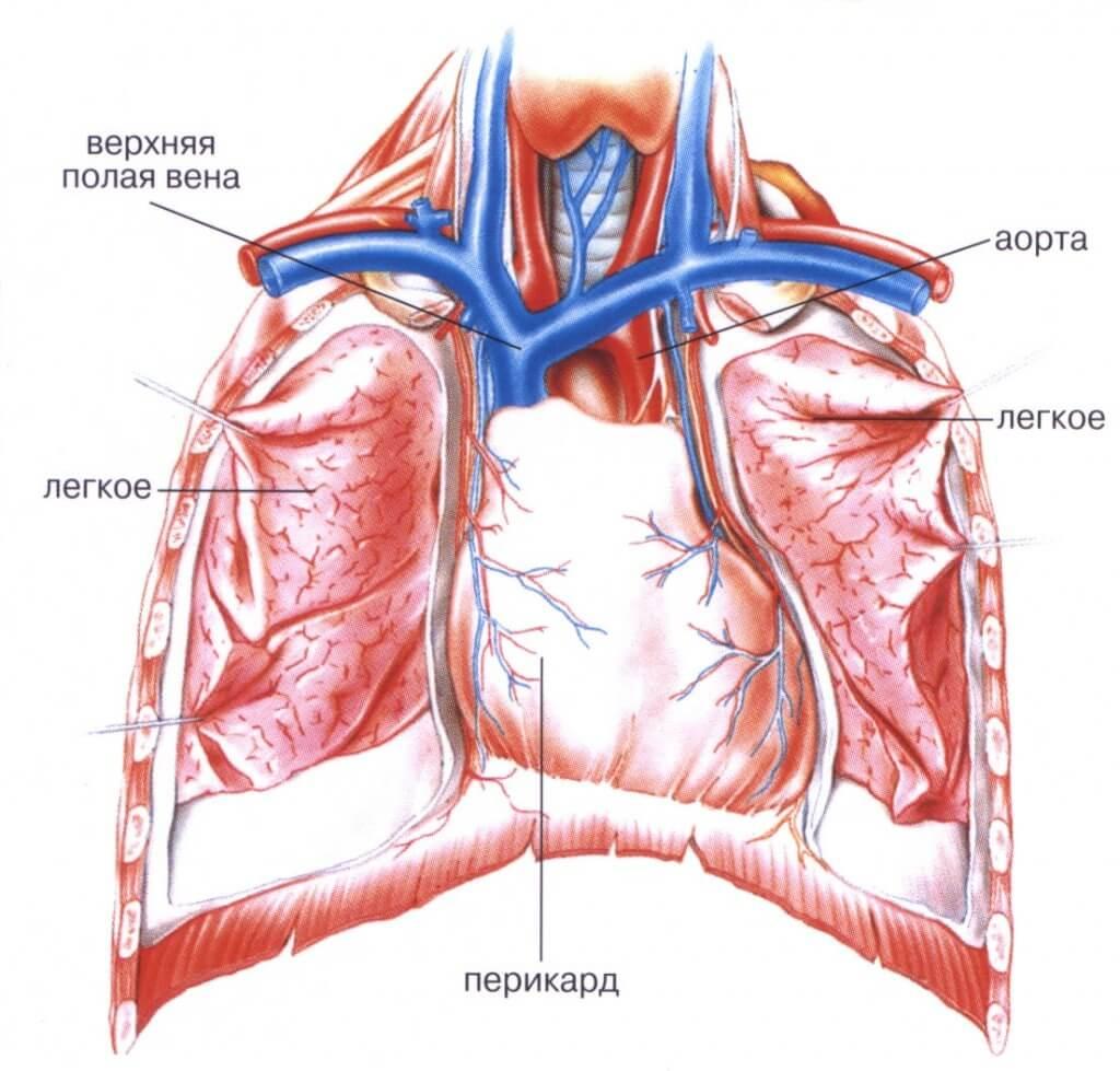 Гидроперикард – это патология околосердечной сумки: как развивается, причины, стадии и формы, диагностика и лечение