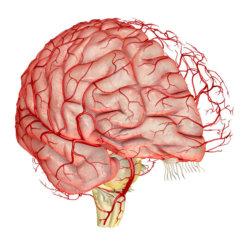 Полезно знать, как чистить сосуды головного мозга народными средствами