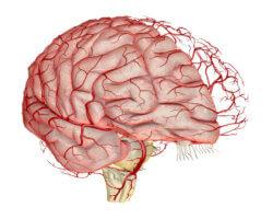 уздг сосудов головного мозга что это такое