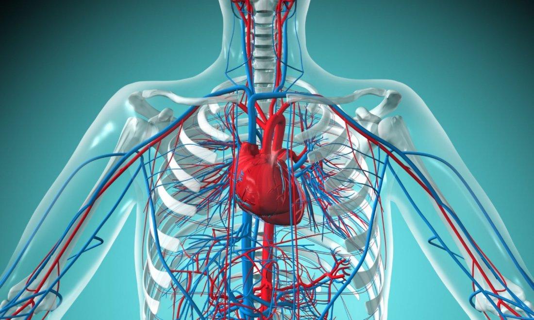 Признаки заболевания сердечной системы