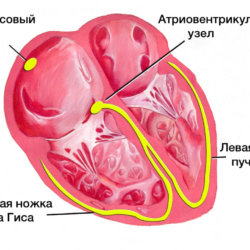 Математика сердечной мышцы: синусовый ритм, отклонение ЭОС влево