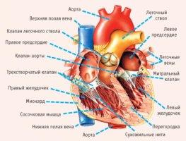 Систолический шум в сердце – что это такое и чем он может быть опасен