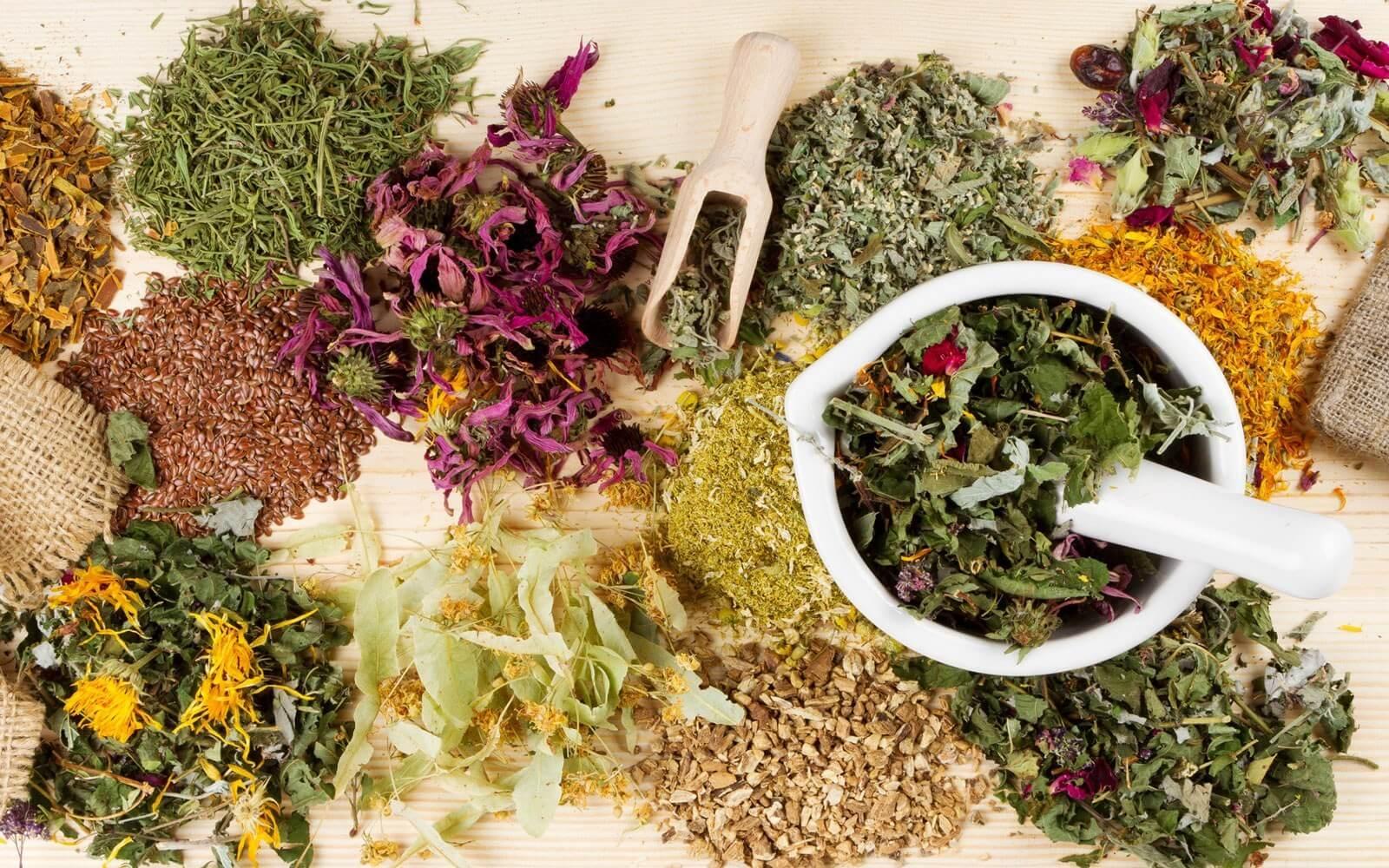 Травы для очистки крови улучшают здоровье и качество жизни