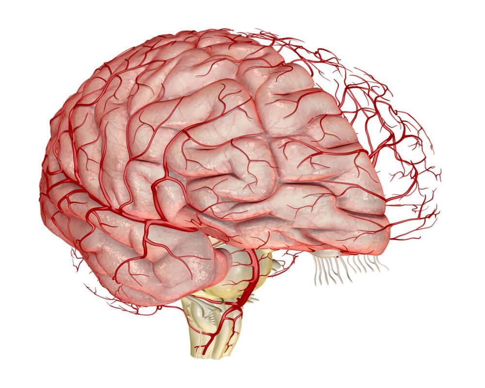 Интракраниальные сосуды головного мозга и их диагностика